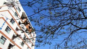 蓝天下的学生公寓和凤凰树