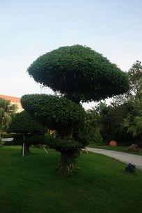 绿色的大树