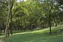 青岛李村公园的草地