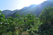 沐浴在阳光下的山峰