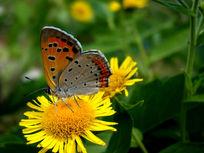 色彩斑斓的蝴蝶
