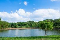 池塘树木与蓝天白云