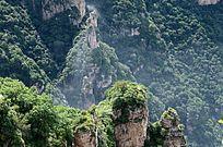 太行山峰植被