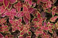 彩色叶子背景素材
