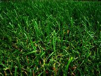 绿草植物背景