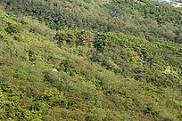 浮山的植被