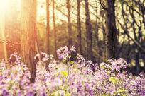树林里的野花
