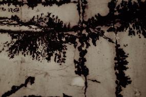 水杉水墨背景