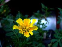 绿丛中的红黄草