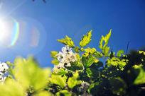 阳光下树木的枝叶