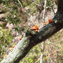 黄山上的植被 菌类