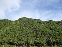 绿色植被覆盖群山