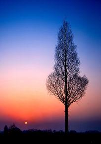 夕阳余晖下的树