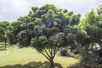 南湖公园阳光下大树