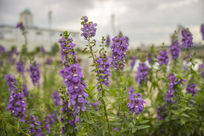 南湖公园阳光下的花