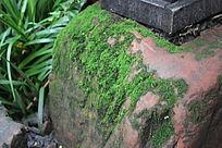 石头上的植被图