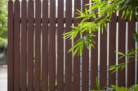 围栏前的竹子