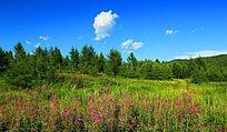 植被野花风景
