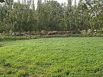 绿色的草丛
