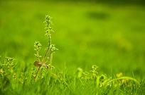逆光下的绿草