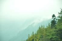 青城山云雾