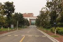 学校的马路
