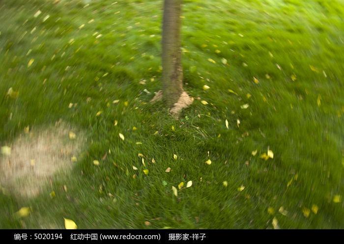 草地上的叶子图片