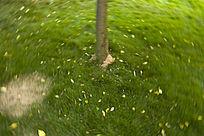 草地上的叶子