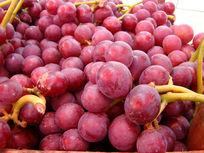 好看好吃的紫色葡萄