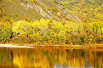 秋染森林河