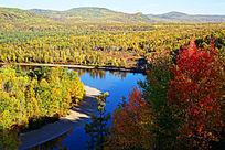 森林河之色