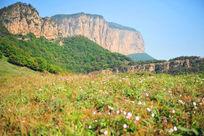 山脚下的野花