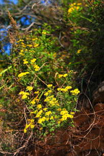 草丛中的野花
