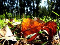 绿草地上的黄色落叶