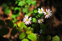 阳光下盛开的野花