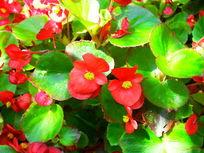 公园里红色的小花摄影图