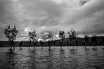 云南整齐排列的湖中树