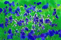 电脑水彩画《蓝色的花》