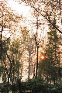 夕阳下的树林意境图片