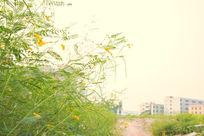城市周围的小花朵