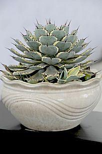 绿色多瓣植物