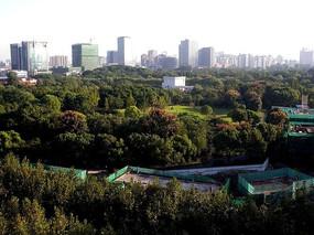 城市大型绿地
