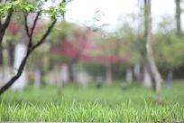 春天的碧草