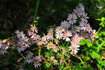 阳光照耀下的野花