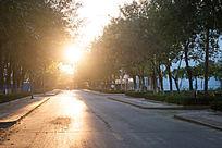 夕阳下的林荫大道