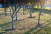 清晨的阳光洒落在林中草地