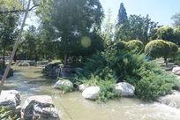 树林里的小溪