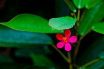 一片小红花