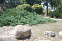 草丛边的河水