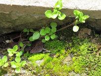 春天的树芽